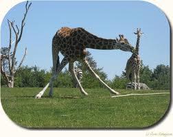 rabat Givskud Zoo masage liste